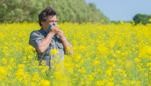 Nutrition and hay fever