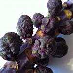 brussels sprouts purple