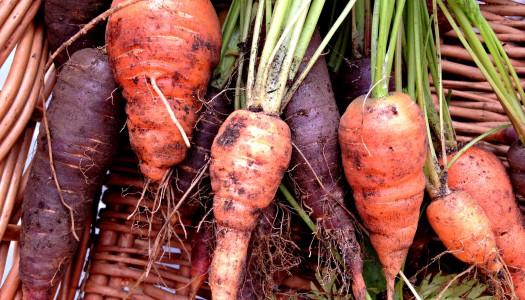 7 reasons to get gardening